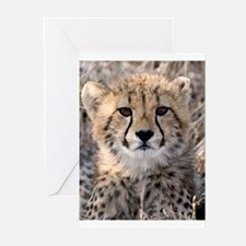 Cheetah Cub Greeting Cards (Pk of 20)