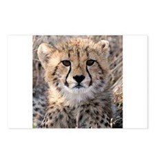 Cheetah Cub Postcards (Package of 8)