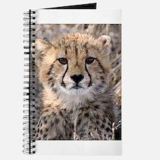 Cheetah Cub Journal