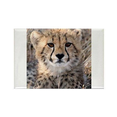 Cheetah Cub Rectangle Magnet (10 pack)
