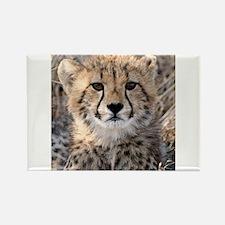 Cheetah Cub Rectangle Magnet