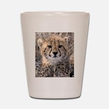 Cheetah Cub Shot Glass