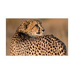 Cheetah 38.5 x 24.5 Wall Peel