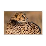 Cheetah 22x14 Wall Peel