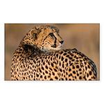 Cheetah Sticker (Rectangle 50 pk)