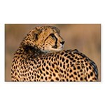Cheetah Sticker (Rectangle 10 pk)