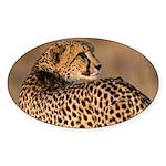 Cheetah Sticker (Oval 50 pk)