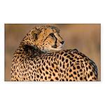 Cheetah Sticker (Rectangle)