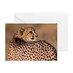 Cheetah Greeting Cards (Pk of 20)