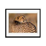 Cheetah Framed Panel Print