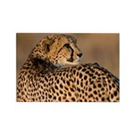 Cheetah Rectangle Magnet (100 pack)