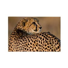 Cheetah Rectangle Magnet (100 pack)