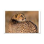 Cheetah Car Magnet 20 x 12