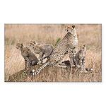 Cheetah Family Sticker (Rectangle 10 pk)