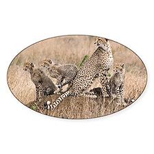 Cheetah Family Decal
