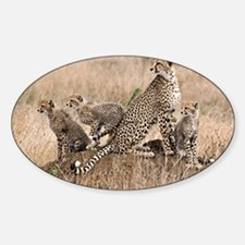 Cheetah Family Sticker (Oval)
