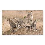 Cheetah Family Sticker (Rectangle)