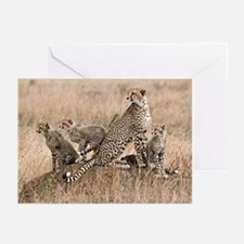 Cheetah Family Greeting Cards (Pk of 20)