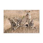 Cheetah Family Mini Poster Print