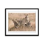 Cheetah Family Framed Panel Print