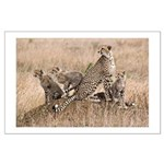 Cheetah Family Large Poster