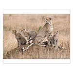 Cheetah Family Small Poster