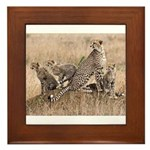 Cheetah Family Framed Tile