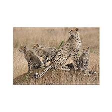 Cheetah Family Rectangle Magnet (100 pack)