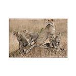Cheetah Family Rectangle Magnet (10 pack)