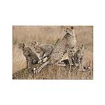 Cheetah Family Rectangle Magnet