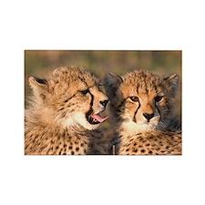 Cheetah cubs Rectangle Magnet