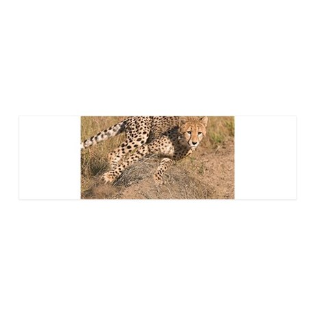 Cheetah On The Move 42x14 Wall Peel