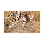Cheetah On The Move 38.5 x 24.5 Wall Peel