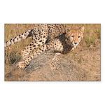 Cheetah On The Move Sticker (Rectangle 50 pk)