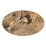 Cheetah On The Move Sticker (Oval 10 pk)