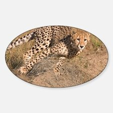 Cheetah On The Move Decal