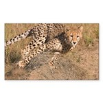 Cheetah On The Move Sticker (Rectangle)
