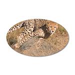 Cheetah On The Move 38.5 x 24.5 Oval Wall Peel