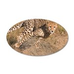 Cheetah On The Move 22x14 Oval Wall Peel