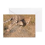Cheetah On The Move Greeting Card