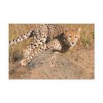Cheetah On The Move Mini Poster Print