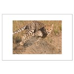 Cheetah On The Move Large Poster