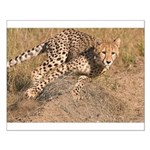 Cheetah On The Move Small Poster