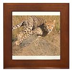 Cheetah On The Move Framed Tile