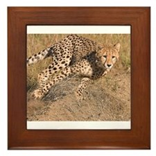 Cheetah On The Move Framed Tile