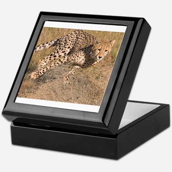 Cheetah On The Move Keepsake Box