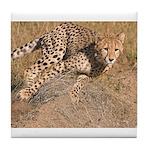 Cheetah On The Move Tile Coaster