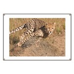 Cheetah On The Move Banner