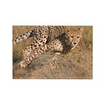 Cheetah On The Move Rectangle Magnet (100 pack)