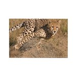 Cheetah On The Move Rectangle Magnet